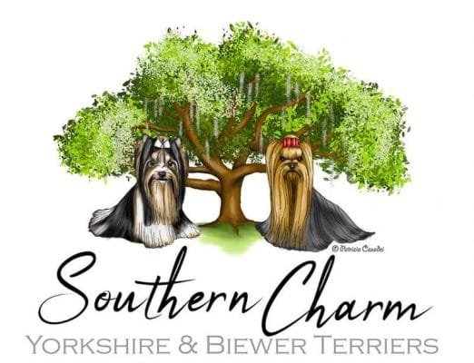 southern charm yorkshire and biewer terriers